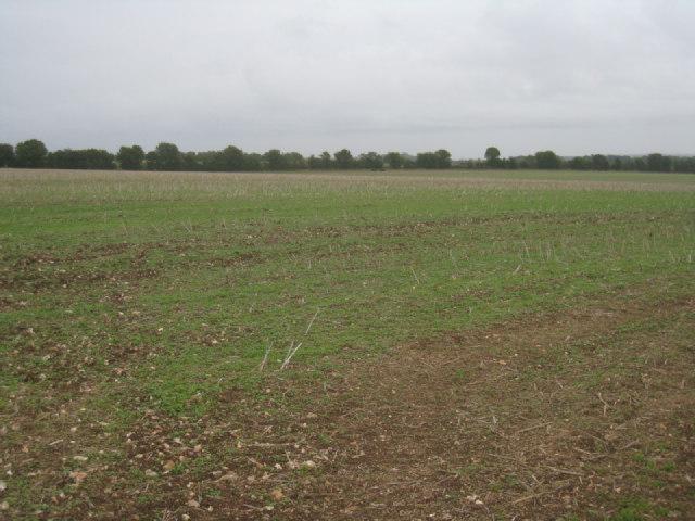Farmland north of Overton Mill
