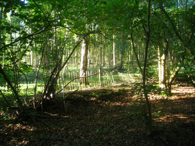 Looking into Ashe Park Copse