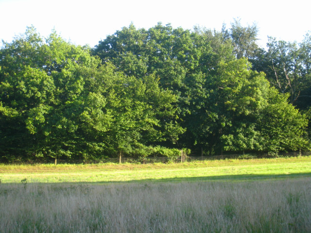 Wooded field boundary