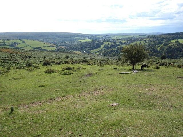Western slopes of Yartor Down, looking towards Dartmeet