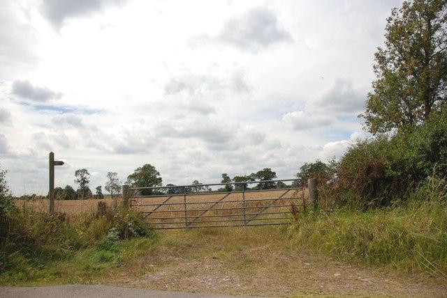 Footpath through a field of Wheat