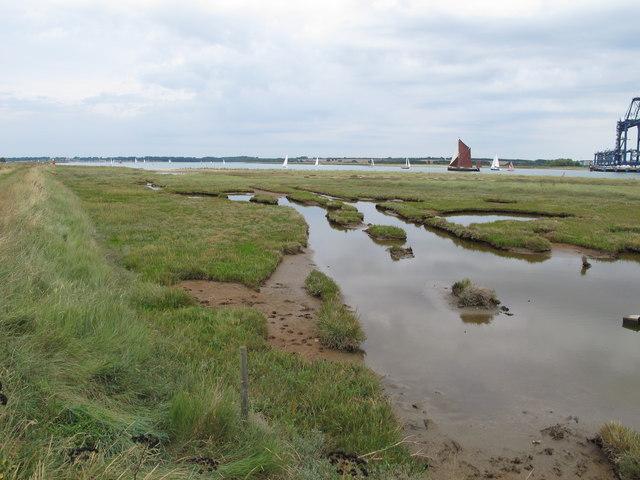 Saltings near Shotley Marina