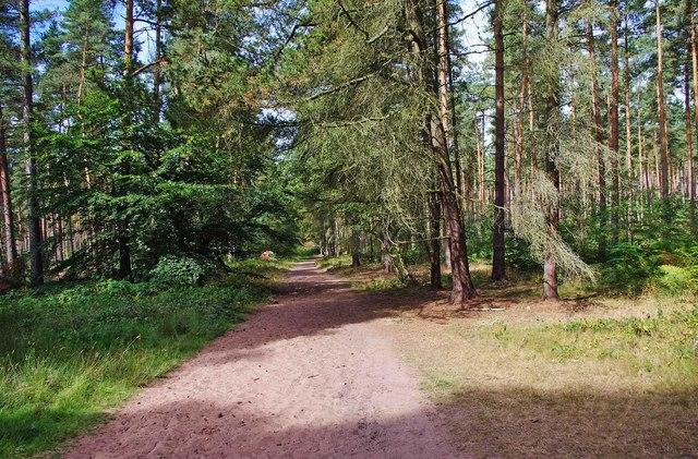 Public bridleway through Million Wood, near Enville