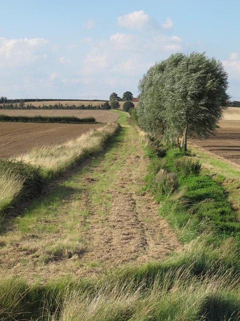 Farm track heading north