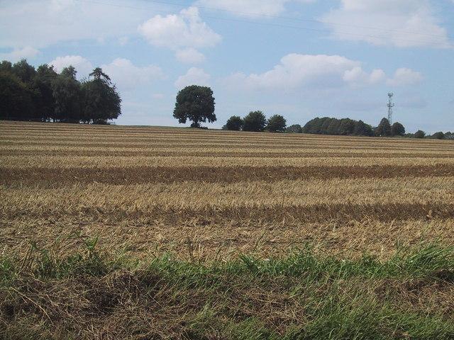 Unfenced field near Warren Lodge