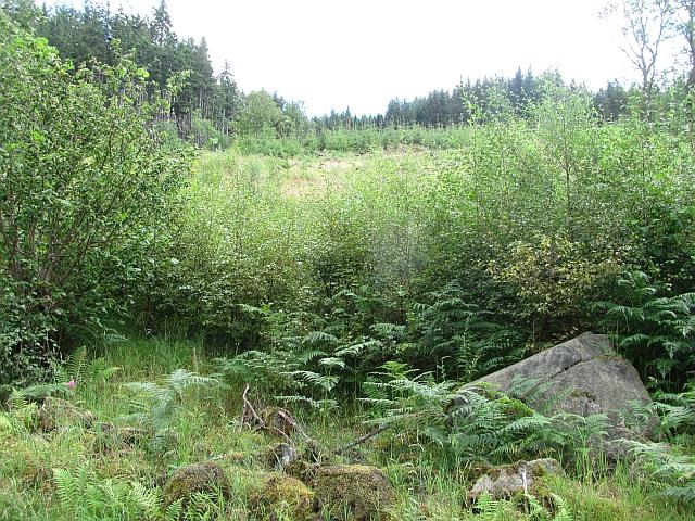 Woodland by Ardradnaig