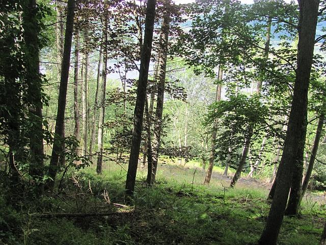 Woodland, Achianich