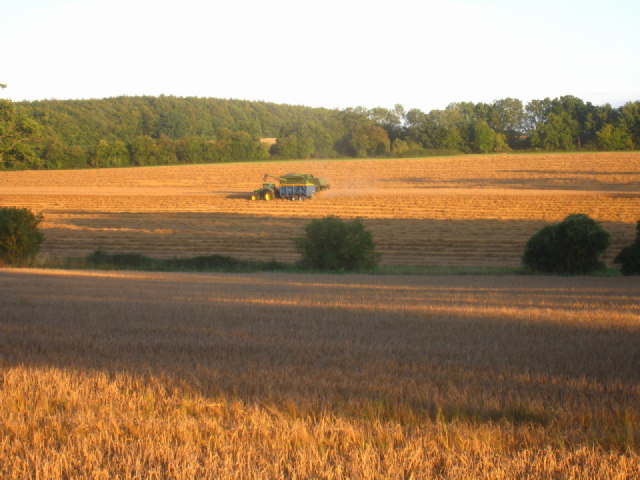 Harvest time in Oakley Park
