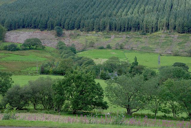 Fields around Pentrewern farm