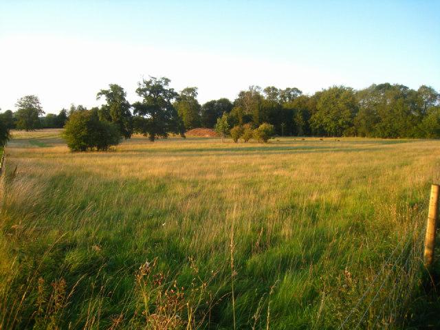 Grazing land - Oakley Park