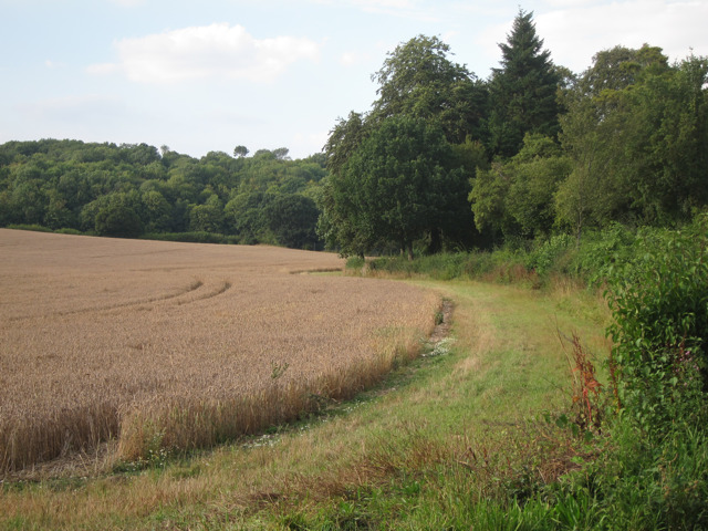 Field by Stalisfield Road