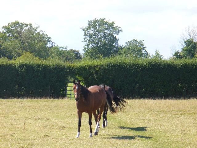 Oxfordshire Way by Charlbury