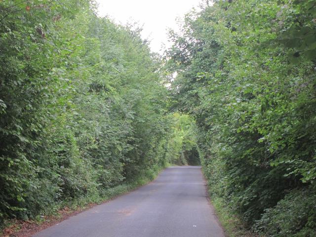 Throwley Road