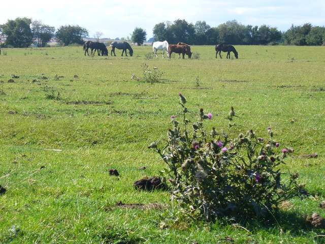 Grazing in the Evenlode Valley