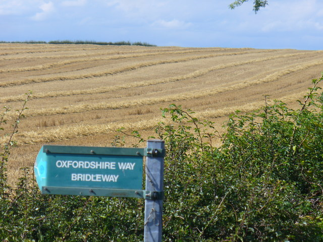 Corn Rows by the Oxfordshire Way