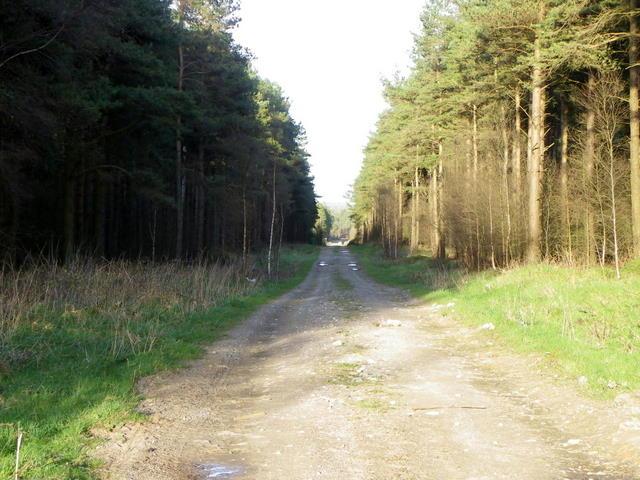 Track near Eavestone