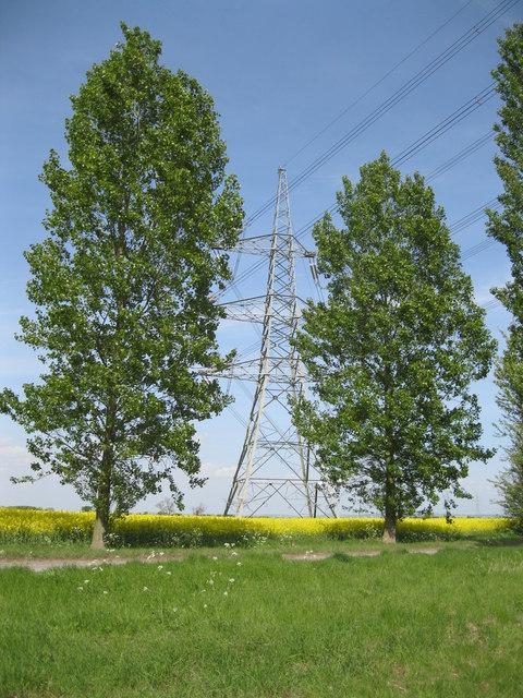 Poplars and pylon