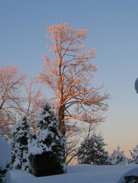 Early winter sun in Horndean village