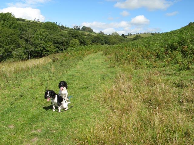 Bridleway near Llantroft