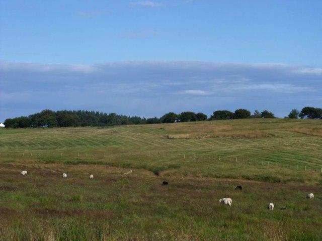 Garbethill, grazing [4]