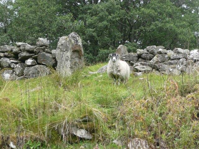 Standing stone at Tirai (3)