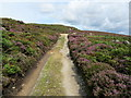 SE0956 : Track on Hammerthorn Hill by Chris Heaton