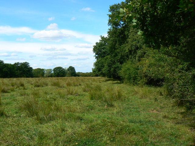 Field east of Minety