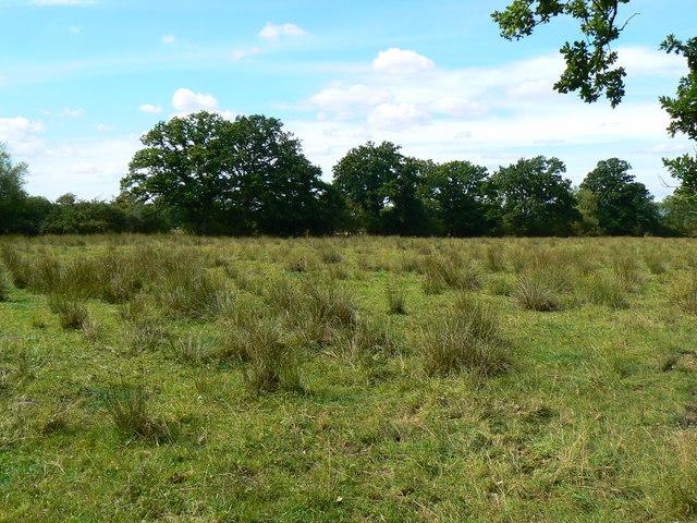 Across a field east of Minety