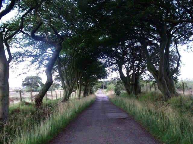 Threaprig to Jawcraig road [2]