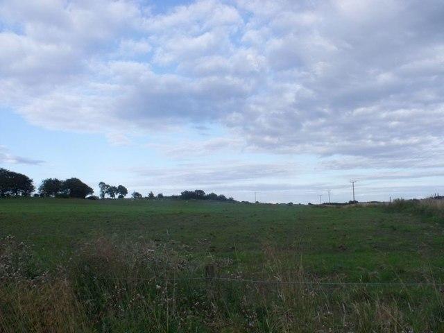 Wester Jawcraig, improved field