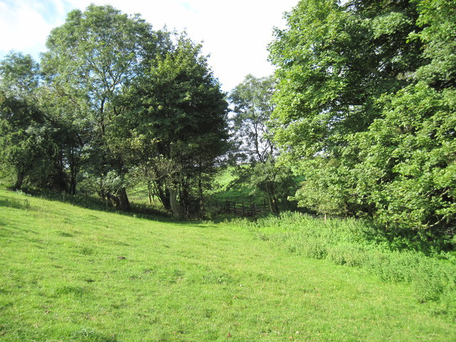 Footpath  to  Whitethorn