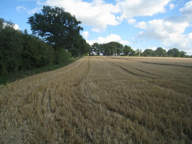 Harvested wheat field - Nurshanger Farm