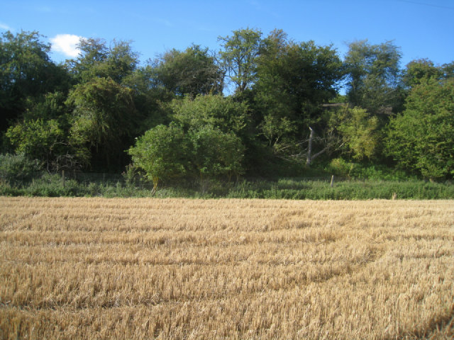 Vegetated railway embankment