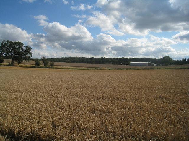 Looking towards Nurshanger Farm