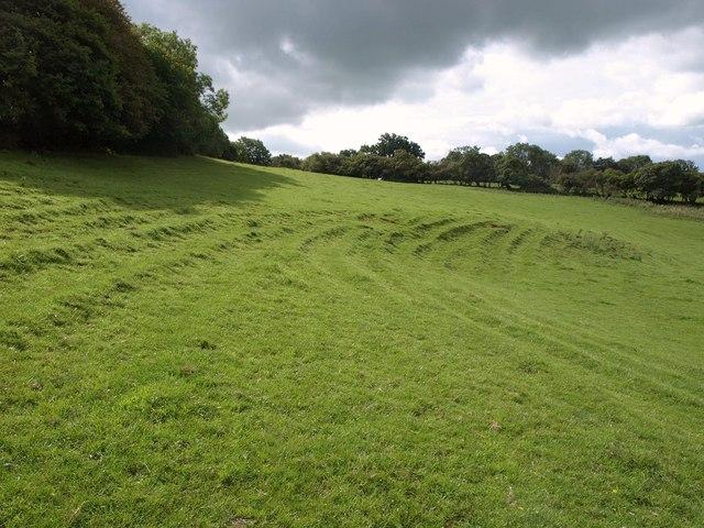 Terracettes near Cheddar