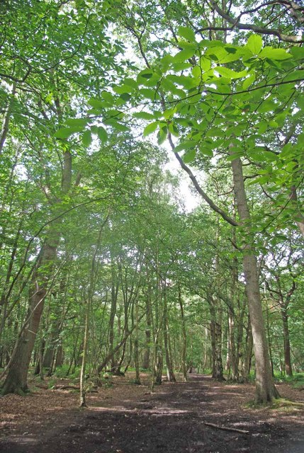 Writtle Forest