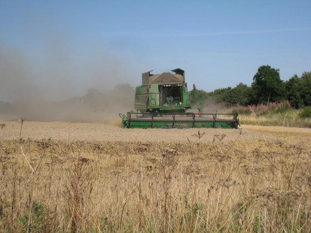 Harvest under way