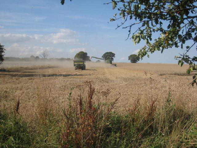 Harvest near Ulceby