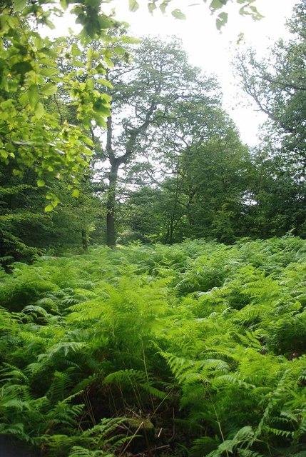 Birch Spring Wood