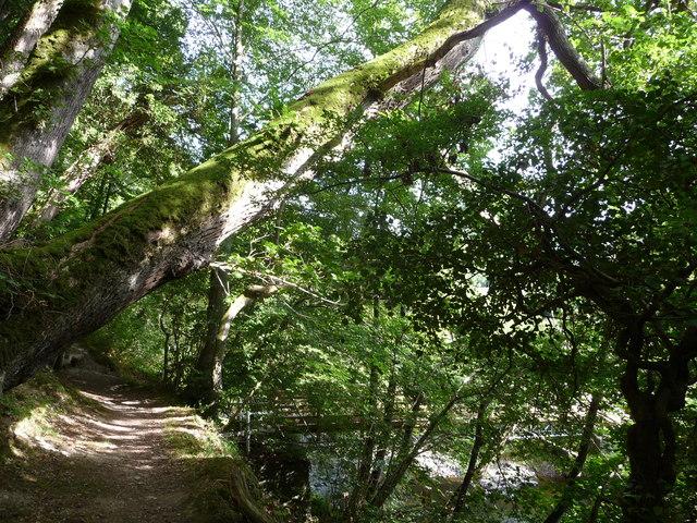 Leaning tree bough near a footbridge