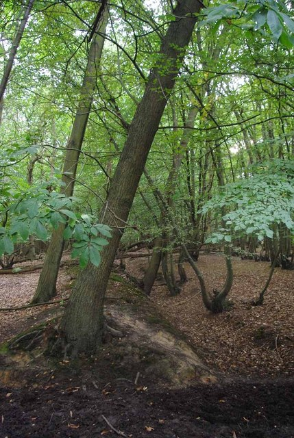 Deerside Wood