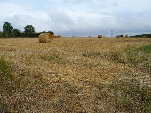 Swiss rolls in stubble field