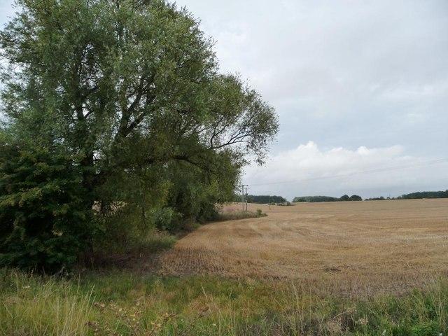 Vestigial hedgerow