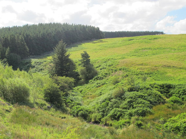 The valley of Shildon Burn