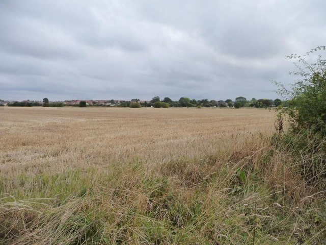 Rye Croft Field [1]