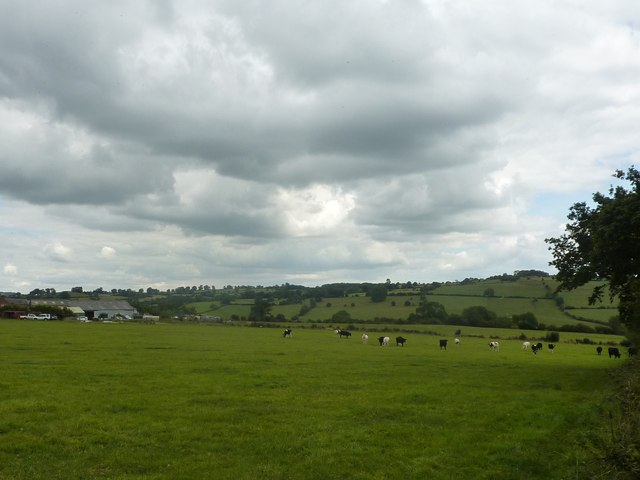 Breck Farm, with grazing cattle