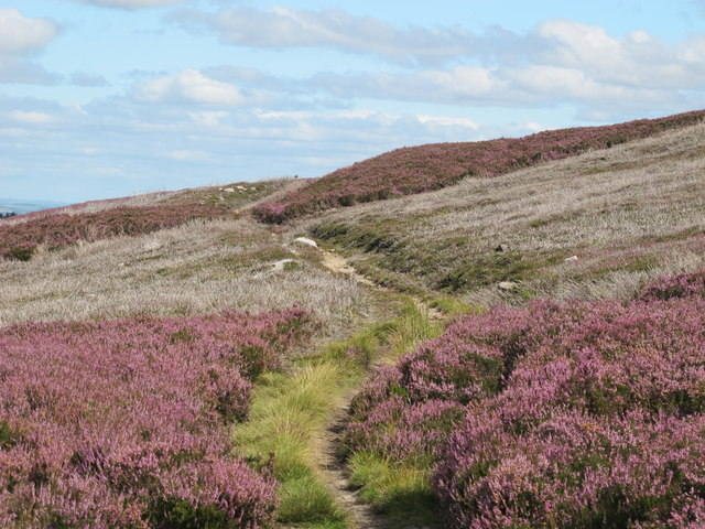 The Carriers' Way on Burntshieldhaugh Fell