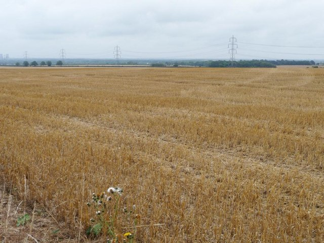 Wood Field, after haymaking