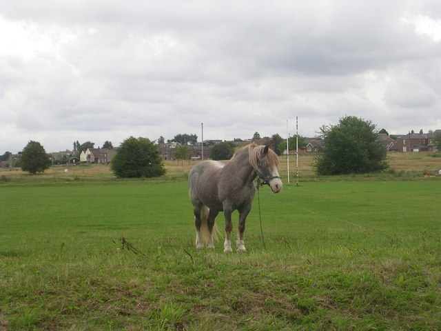 Horse grazing - Hodgson Lane