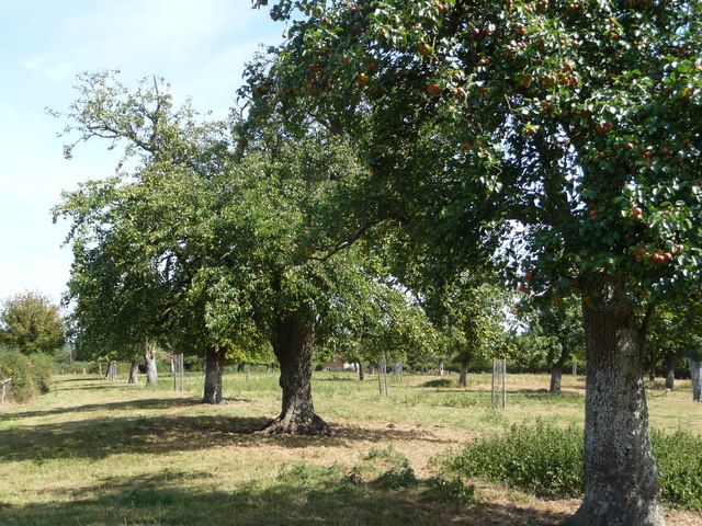 Perry Pear Orchard, Wick Court